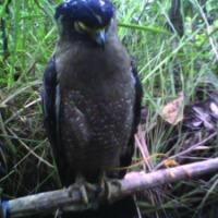 Bahkan kepada Orang yang Menangkap Anak Burung pun Rasulullah Benci